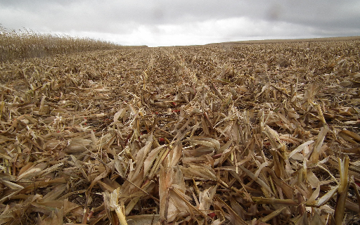 Actively Manage Crop Residue