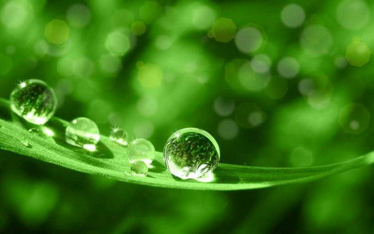 Biobased Products: Two More Factsheets