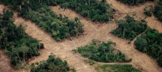 For businesses, keeping forests resilient is key to mitigating long-term supply risk.