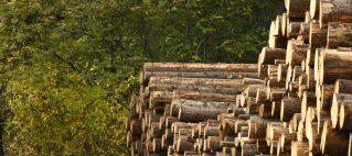 Biomass Derived Fibers